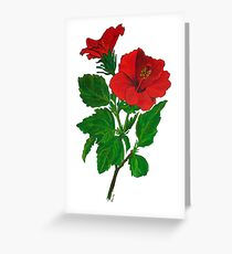 A Tropical Red Hibiscus Flower with Aloha Text Greeting Card