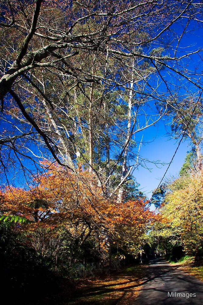 Autumn In Mt. Wilson 4412 by MiImages