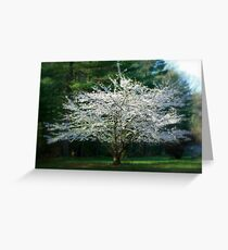 Vision in White... Greeting Card