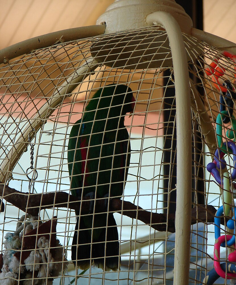 Only a Bird in a Gulided Cage ! by shadyuk