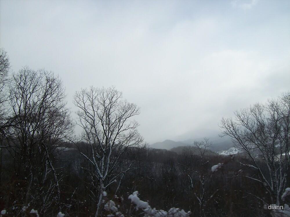Foggy Morning by diann