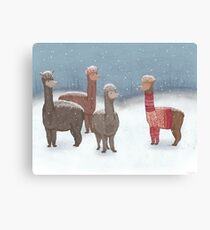Winter Show Off Canvas Print