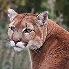 Mountain Lion by Margaret Metcalfe