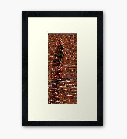 Climbing Framed Print
