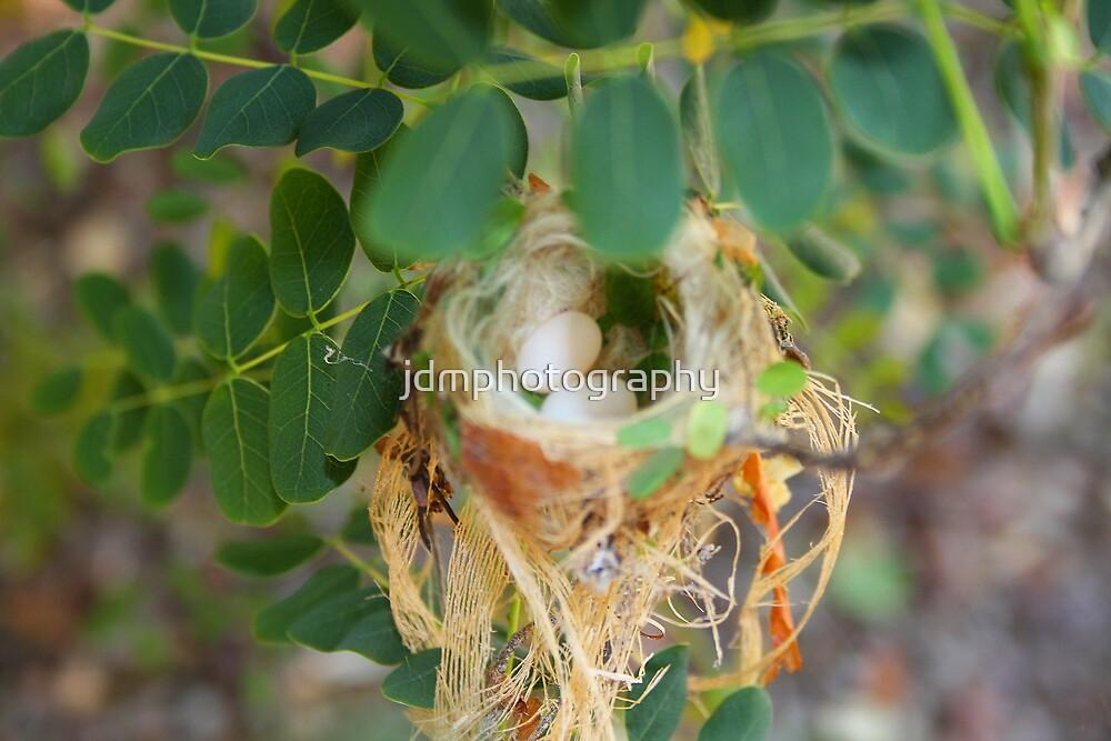 Humming birds nest  by jdmphotography