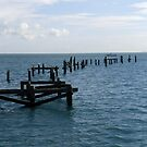 Dorset ~232 by trish725