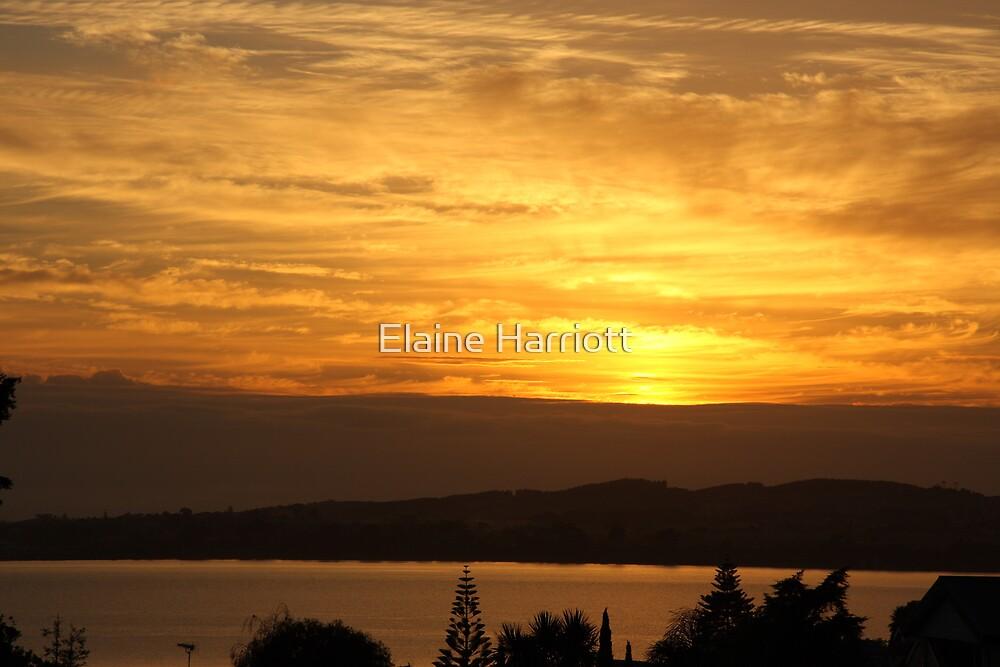 Sun Silhouettes by Elaine Harriott