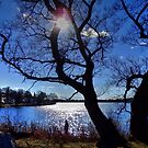 Winter Sun by Stephen Burke