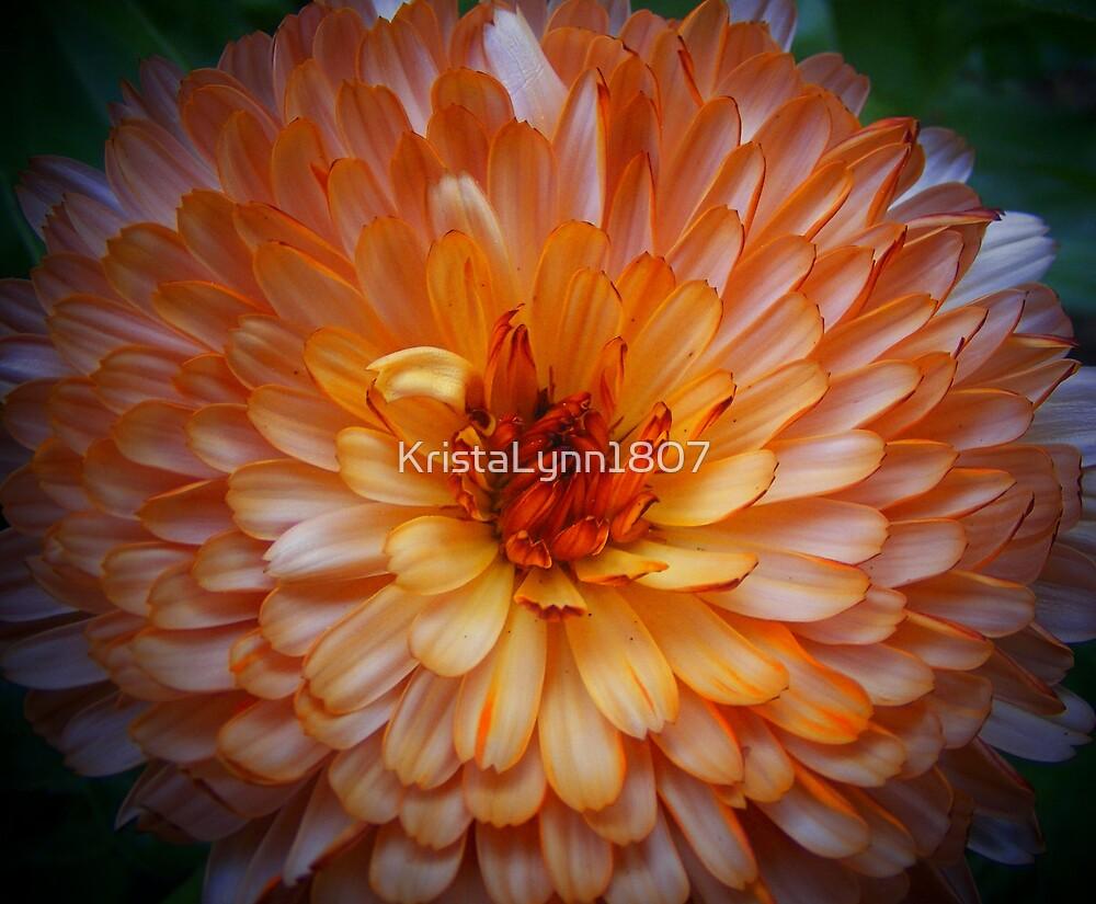 Full Framed Flower by KristaLynn1807