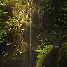 Fairy Glen by Brandt Campbell