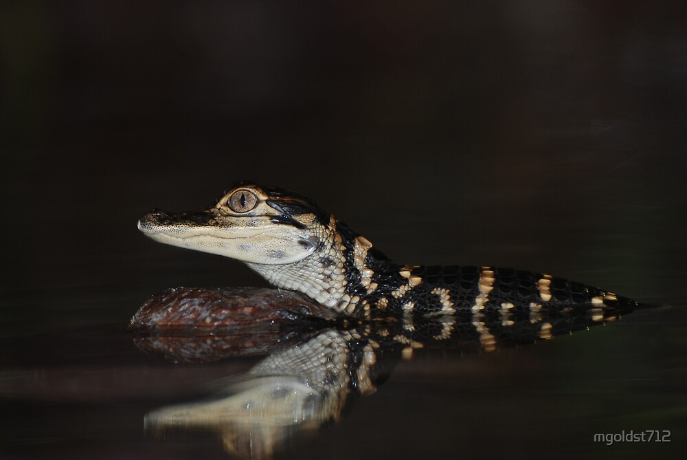 Baby Alligator by mgoldst712