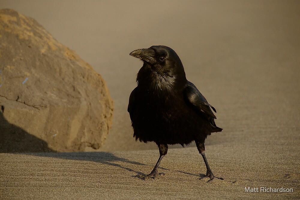 crow by Matt Richardson
