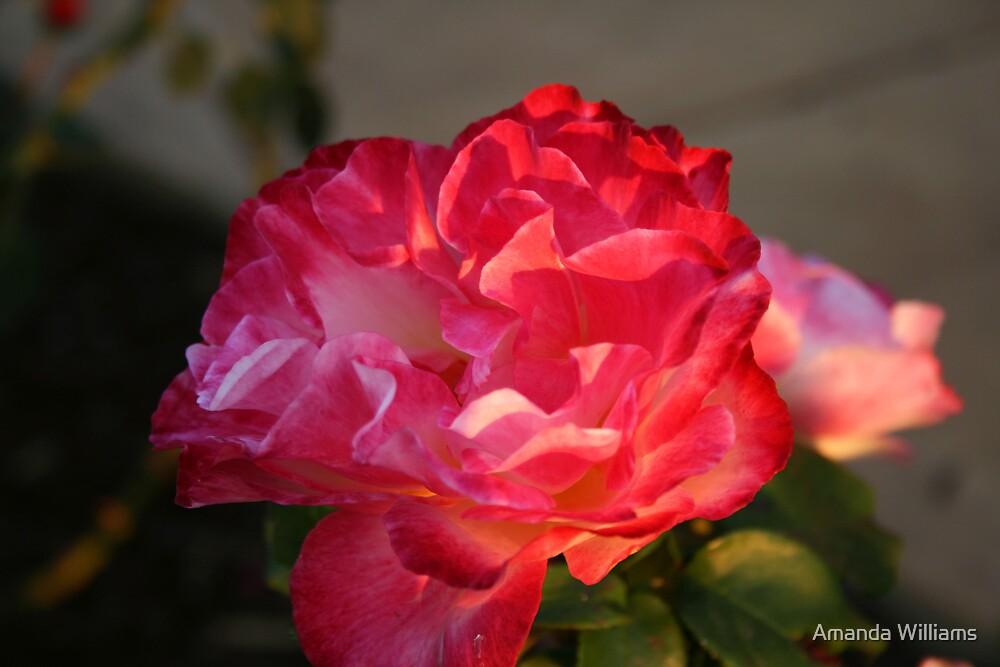 flower by Amanda Williams