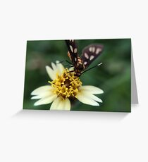 Macro Photography Insect on flower Greeting Card