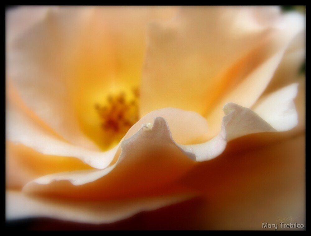 One little ruffle.. by Mary Trebilco
