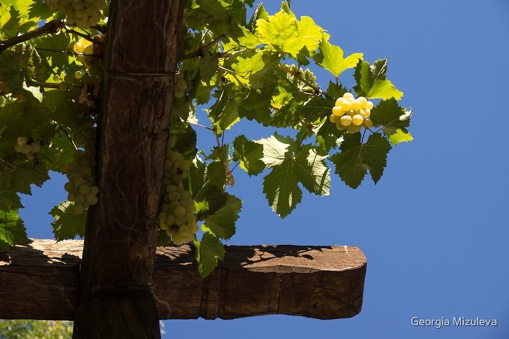 Harvest in the Sky by Georgia Mizuleva