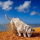 Hawaiian Vacation: I Can Dig It! by Alex Preiss