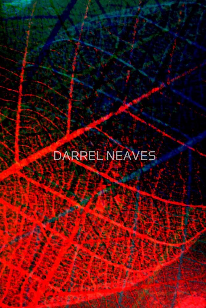 red leaf by DARREL NEAVES