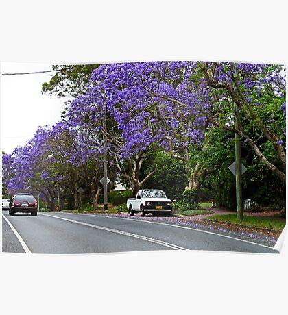 Jacaranda In Bloom Poster