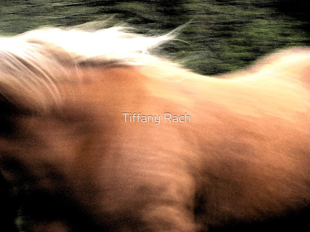 Horse Dreams by Tiffany Rach