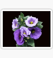 Sunlit Purple Lisianthus on Black Background Sticker