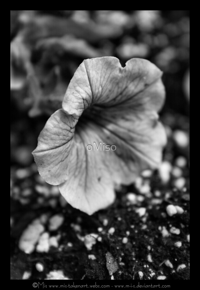 ... Sad lil guy ... by oMiso
