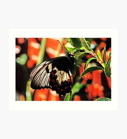 Ein Schmetterling in meinem Garten Kunstdruck