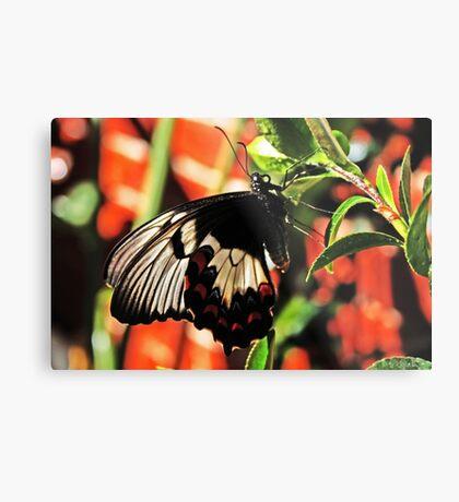Ein Schmetterling in meinem Garten Metalldruck