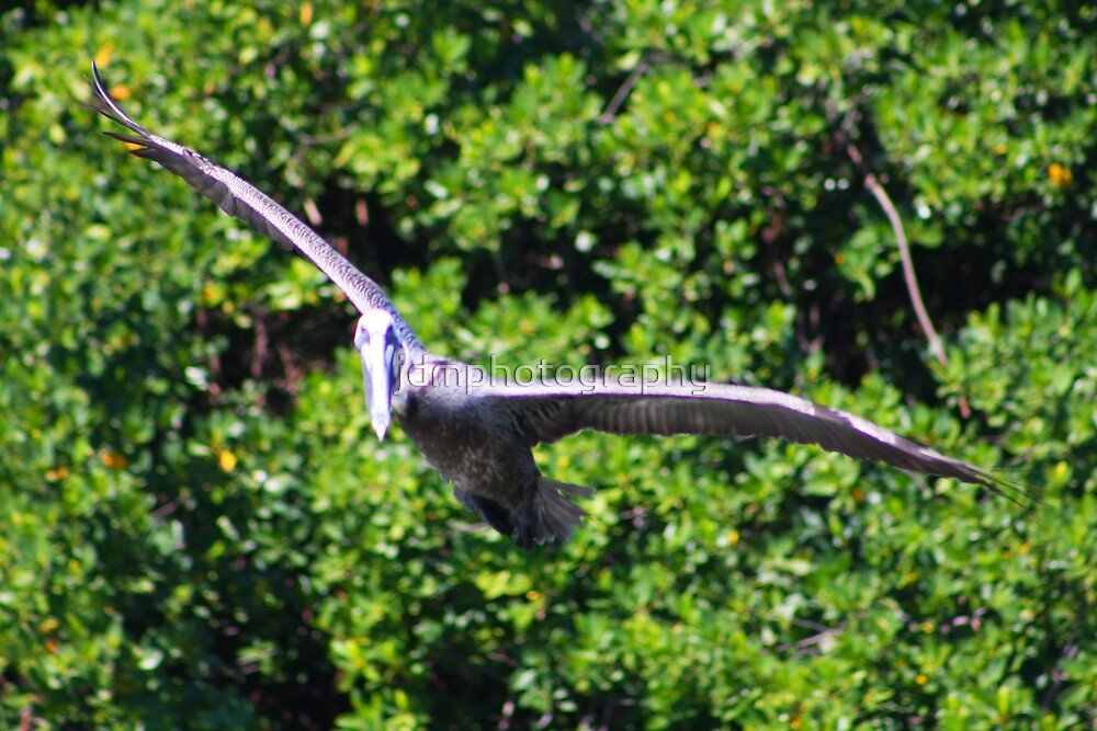 Full flight (Pelican) by jdmphotography