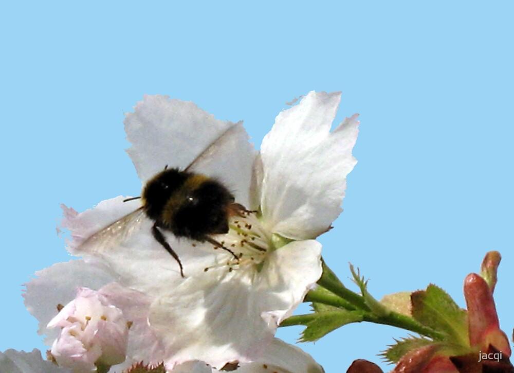 Bum Bum Bee by jacqi