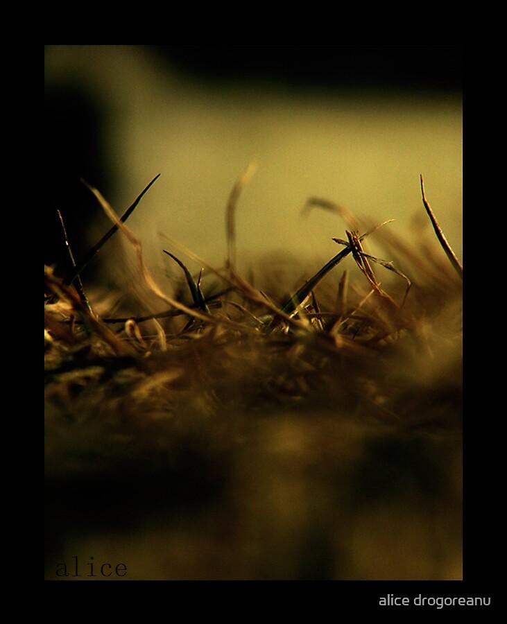 sweet november by alice drogoreanu