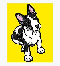 Black And White Bull Terrier Photographic Print