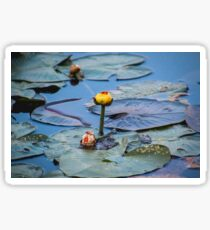 Lily Pad Sticker