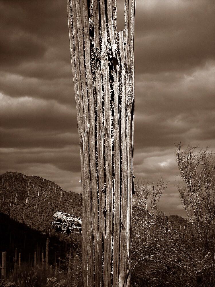 Ribs by Wilson Wyatt  Photography