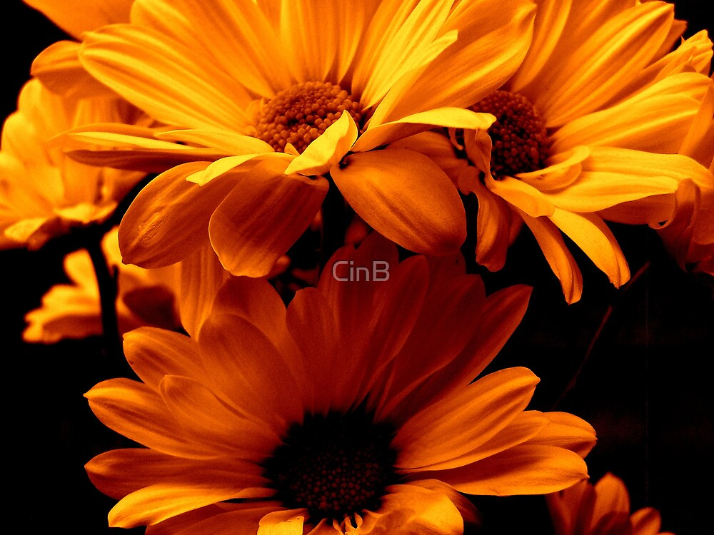 Fire Flowers by CinB