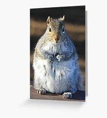 I'm not fat I'm insulating for the winter Greeting Card
