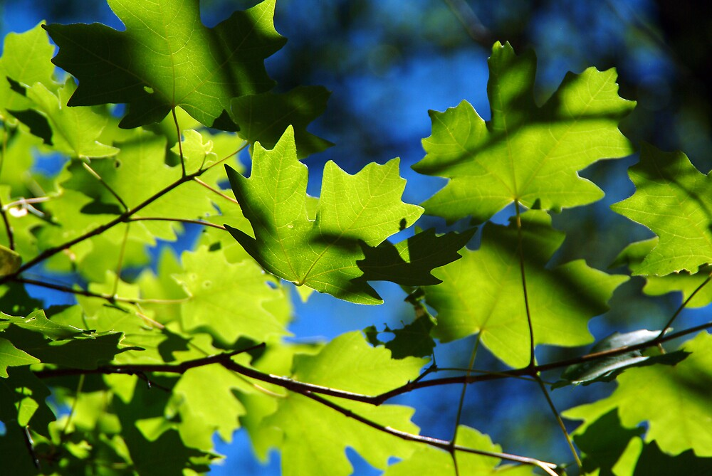 Blue & Green by Wilson Wyatt  Photography