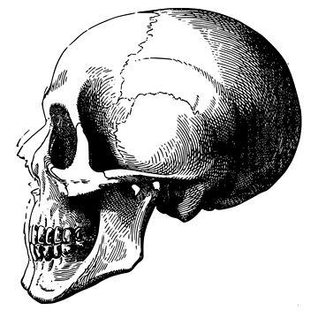 Skull Sketch by bandsnthings