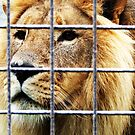 Lion by Ben de Putron
