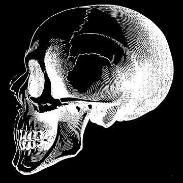 white skull by bandsnthings