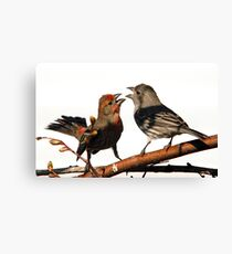 Mating Rituals Canvas Print