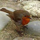 Robin by trish725