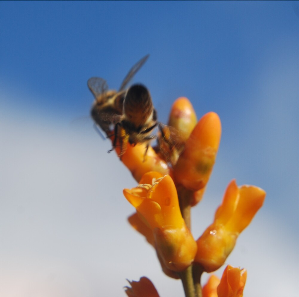 Bees by Princessbren2006