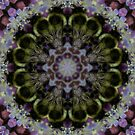 Bee Mandala by Elisa Camera
