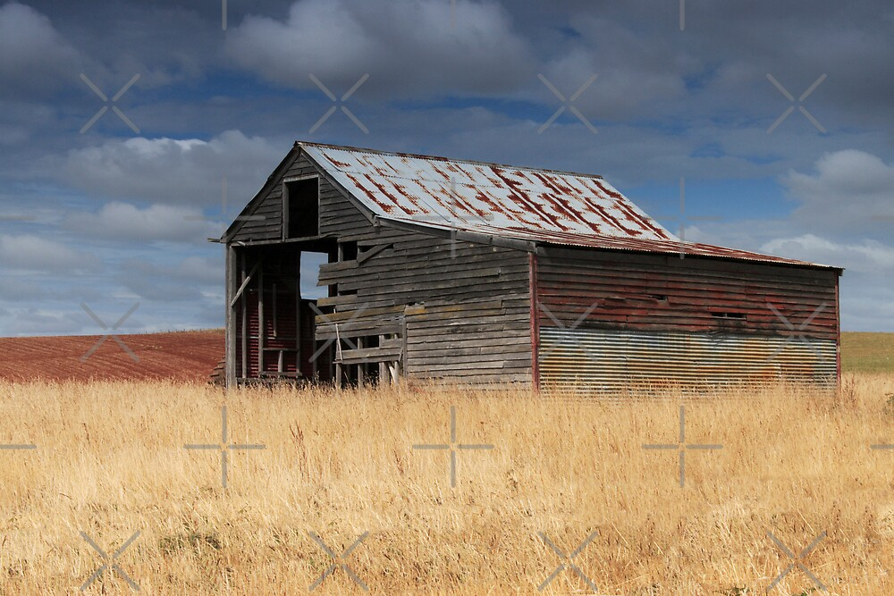Shed South of Ulverstone by Adrianne Yzerman