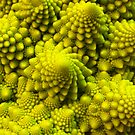 Fibbonaci Pattern in Romanesco brocolli by Rob Price