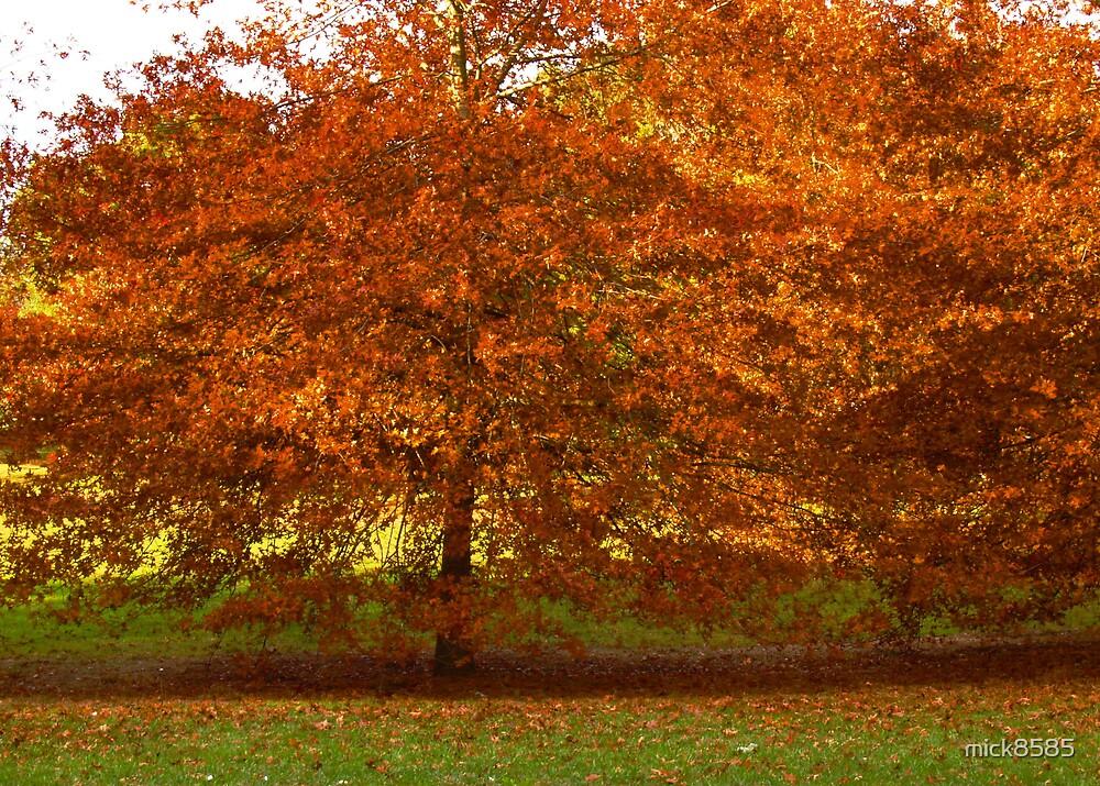 autumn oak by mick8585