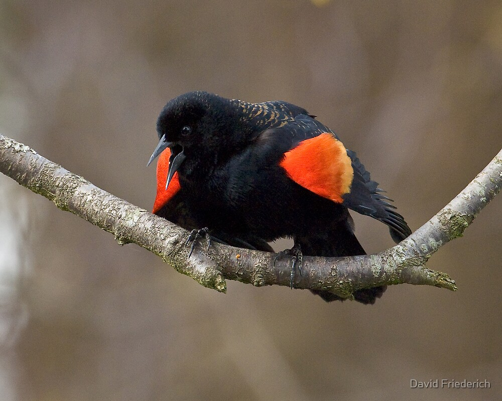 Attracting a Mate by David Friederich