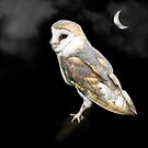 Moonlight Owl by jacqi