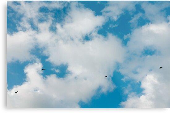 sky, cloud and birds by Fahad Al-Alam